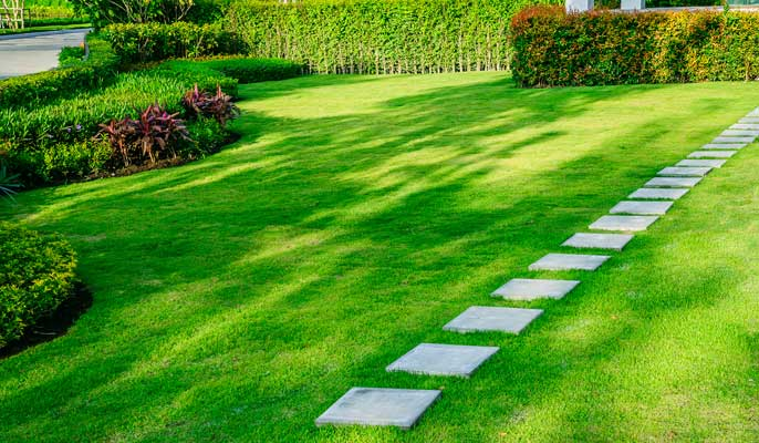 How to grow great lawns using Soil Buddy 6