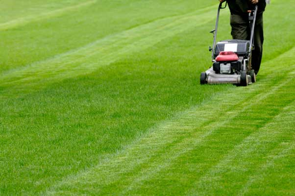 How to grow great lawns using Soil Buddy 7